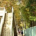 歩道橋の紅葉