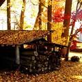 落葉と紅葉風景