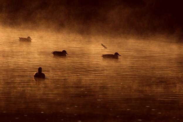 朝靄で温泉雰囲気の越辺川