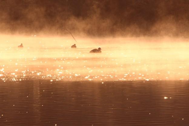 朝靄の越辺川