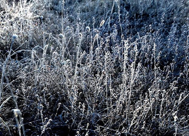 雑草の霜への朝光