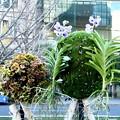 ミチテラス昼の花飾り