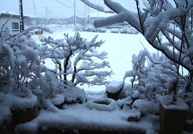 積雪の盆栽棚