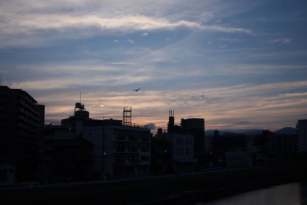 夜明けのコウモリ