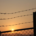 写真: 鉄条網