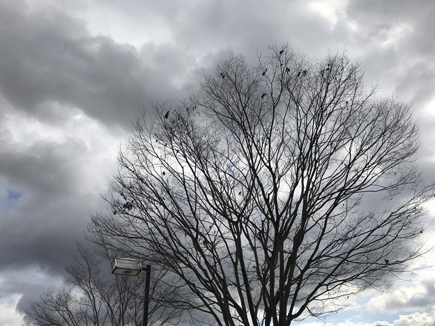 Photos: 木枯らし