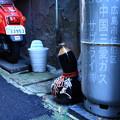 Photos: 居眠り徳利