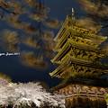 写真: 東寺 夜桜