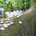 木の幹に賽銭