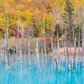 青い池 秋景