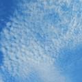 写真: 天頂近くの巻積雲