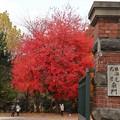写真: 北海道大学南門から