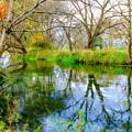 写真: 清き水と晩秋の木立