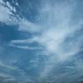 Photos: 天網恢々