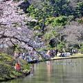 24 桜日和