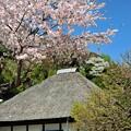 22 桜で覆う