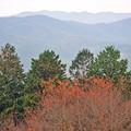 08 常緑樹の紅葉