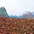 写真: 17 落ち葉から覗く