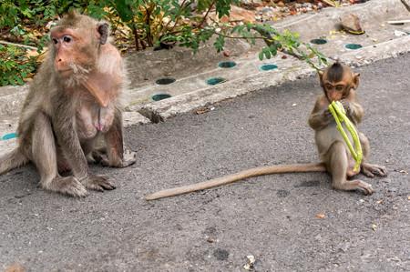 相変わらずここは猿が多い