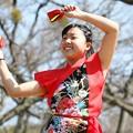 Photos: おどる春2017 西浜09