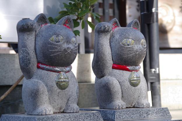 写真: 招き猫(その1)