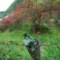 写真: 笹舟