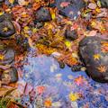 写真: fallen leaves(落ち葉)