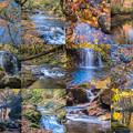 写真: 落ち葉collage