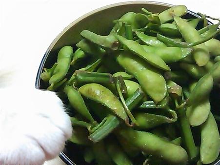 枝豆とナナちゃんのおてて。