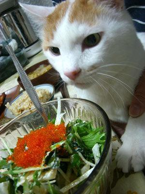 ネコと魚卵の正しい関係