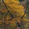 写真: 黄葉橋