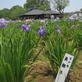 IMG_3902.jpg江戸系