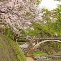 写真: 春の架け橋