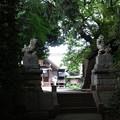 日吉神社 (横浜市港北区日吉)