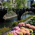 紫陽花と眼鏡橋
