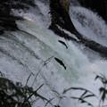 写真: 今が旬です(^_^)v さくらの滝