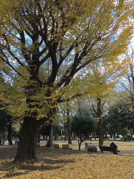 11月_光が丘公園 1