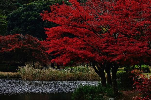秋景色・こども自然公園/ちょっと紅葉名所風。