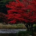 写真: 秋景色・こども自然公園/ちょっと紅葉名所風。