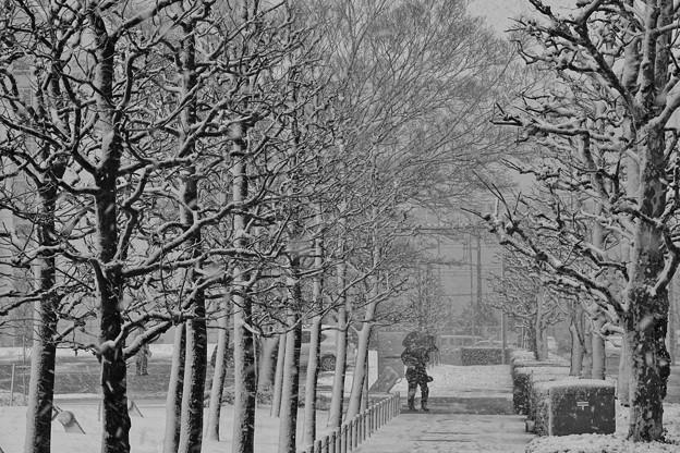 雪の降る街を。