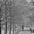 写真: 雪の降る街を。