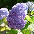 写真: 2009_0531_160320-P1020828
