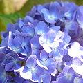 写真: 2009_0531_155838-P1020823