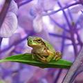 紫陽花マイホーム