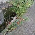 Photos: きれいな草花