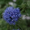 写真: 201105flower 496