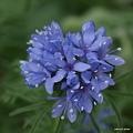 写真: 201105flower 498