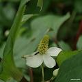 写真: 201105flower 491