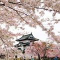 弘前城-続1