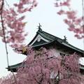 弘前城-続2